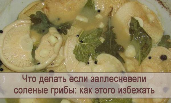 Заплесневели соленые грибы: что делать и как этого избежать