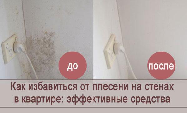Как можно избавиться от плесени на стенах в квартире: обзор средств
