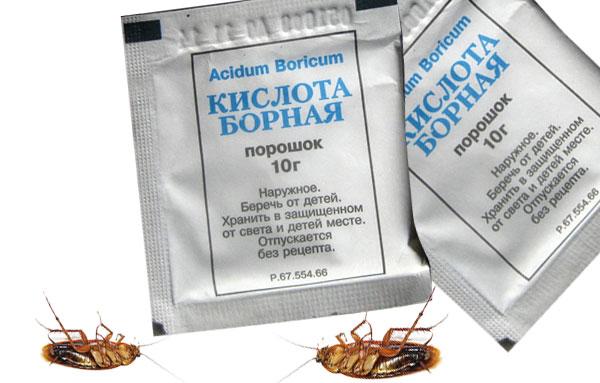 Порошок борной кислоты помогает избавиться от тараканов