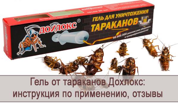 Обзор геля от тараканов Дохлокс: инструкция по применению, отзывы