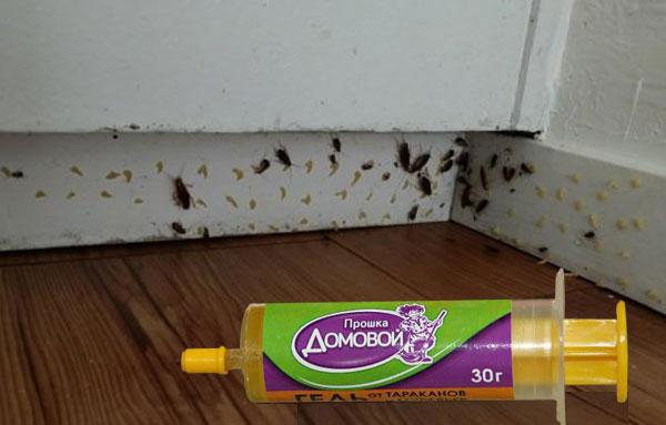 Использование геля от тараканов прошка домовой