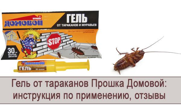Обзор геля от тараканов Прошка Домовой: инструкция по применению
