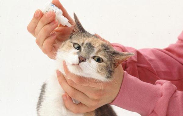 Лечение кота от ушного клеща