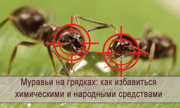 Как избавиться от муравьев на грядках, средства для борьбы с вредителем