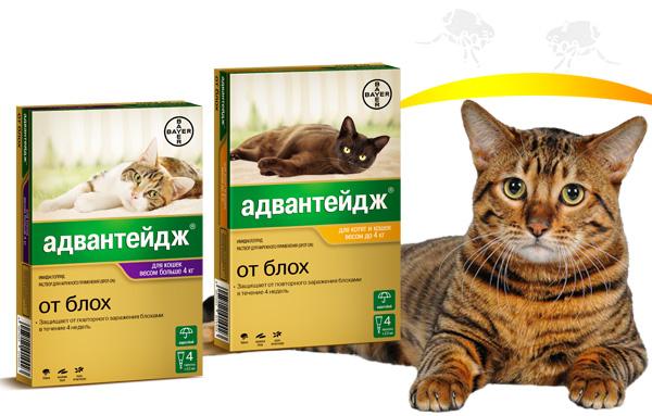 кошачья аллергия фото