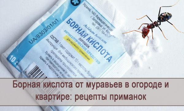 Рецепты приманок из борной кислоты от муравьев в огороде и квартире