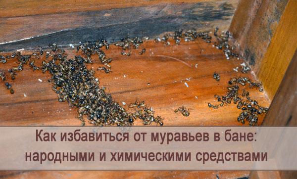 Муравьи в бане: как избавиться народными и химическими средствами