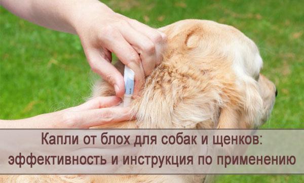 Обзор капель от блох для собак и щенков: инструкция по применению
