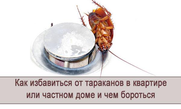 Как избавиться от тараканов в частном доме или квартире: средства и методы борьбы