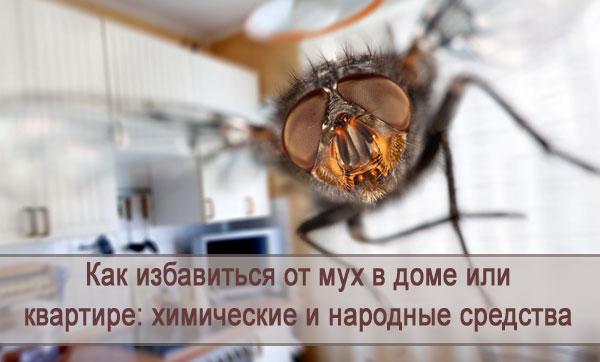 Мухи в доме или квартире: как избавиться химическими и народными средствами