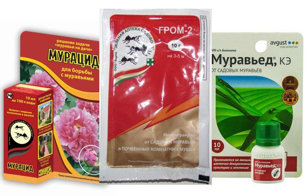 Мурацид, Гром-2, Муравьед