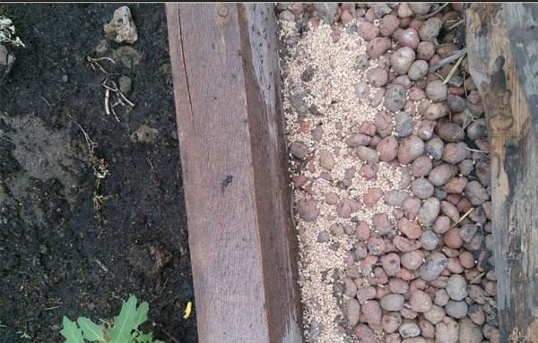 Пшено от муравьев