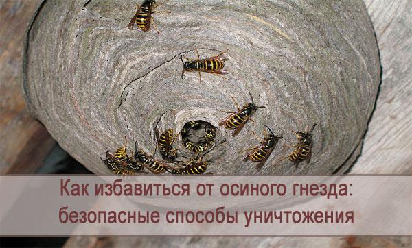 Как быстро избавиться от осиного гнезда: безопасные способы уничтожения