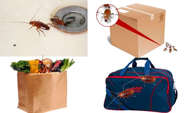 пути проникновения тараканов
