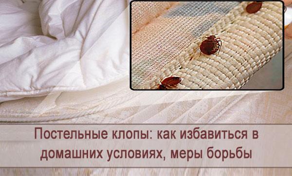 Как избавиться от постельных клопов в домашних условиях, меры борьбы