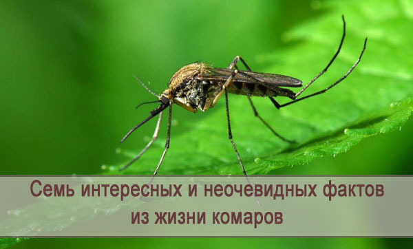 Семь неочевидных фактов о комарах
